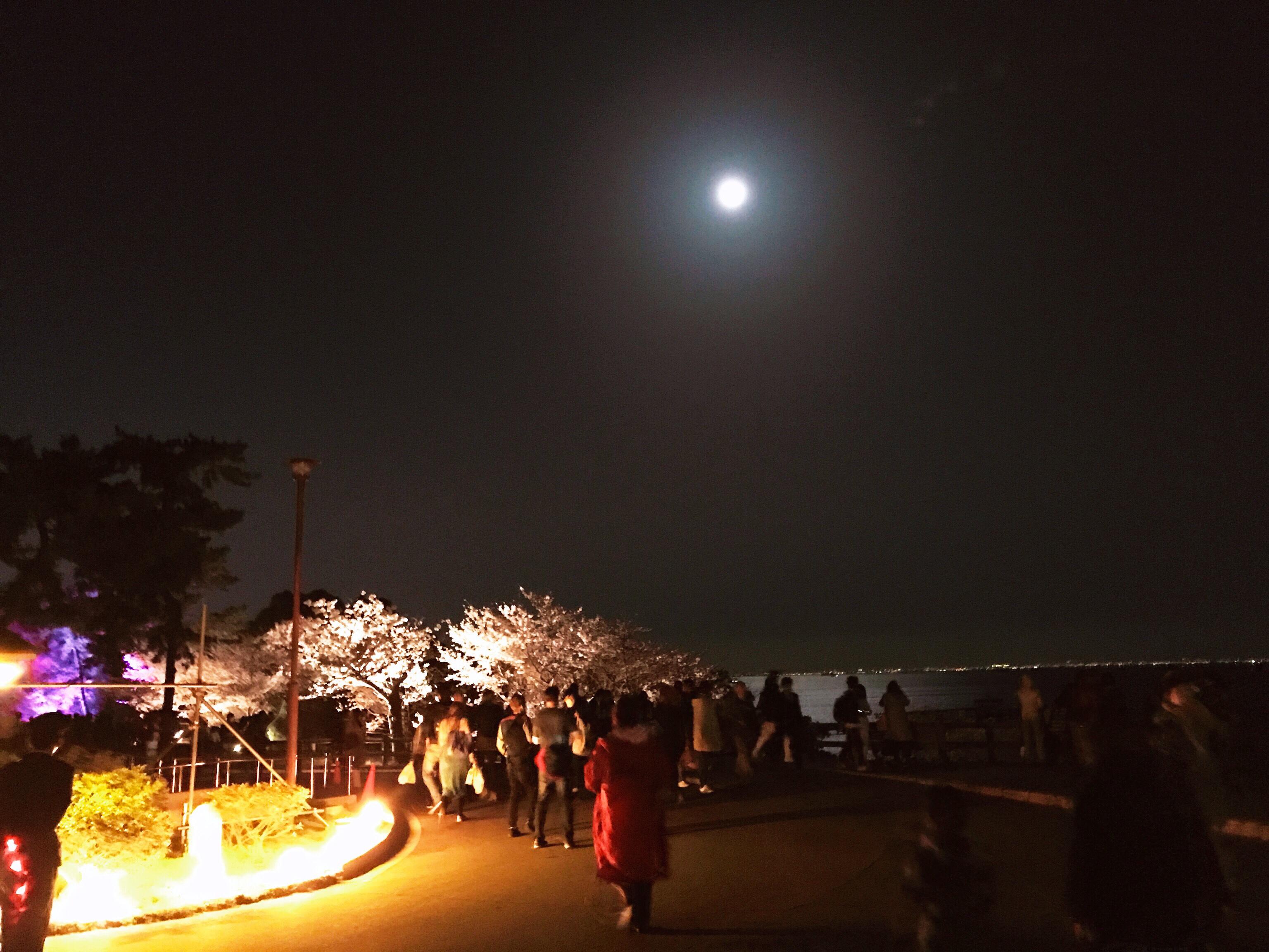 夜桜☆☆☆